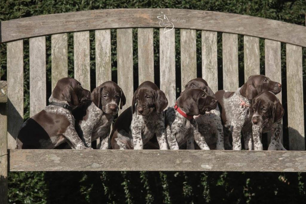 7 puppys